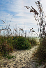 Beach Path Pic